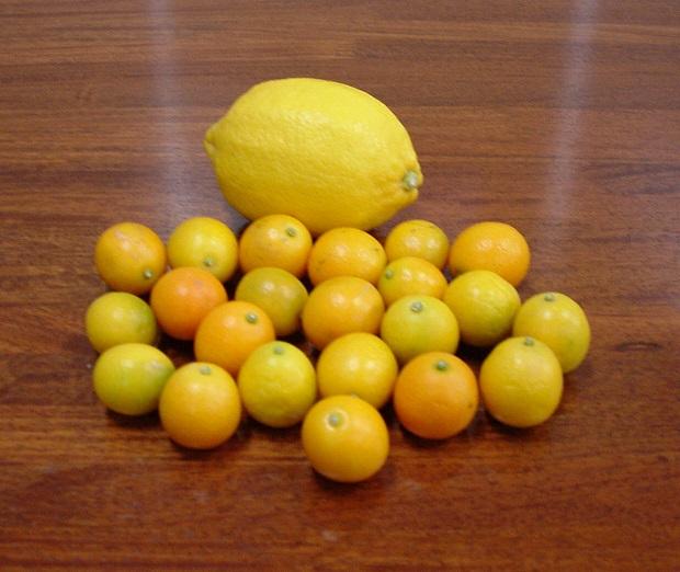 露地物きんかんとレモン